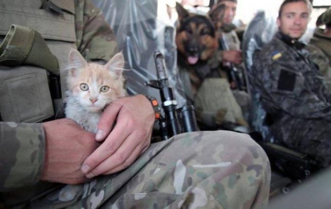 Фото: Кот-патриот
