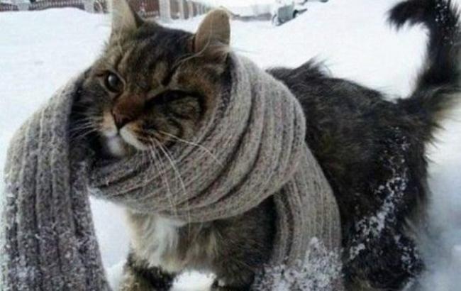 Фото: Синоптики прогнозируют морозы в Украине (Fakty ICTV)