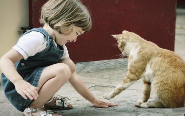 Фото: От аллергии на кошек страдают и дети (allaboutcats.ru)