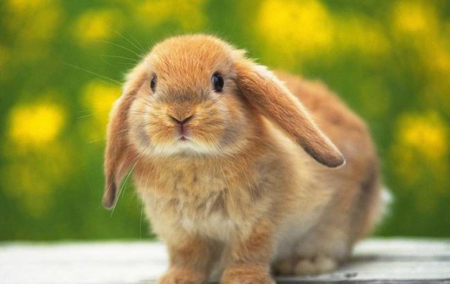 Фото: Кроликов ждет оживление на личном фронте