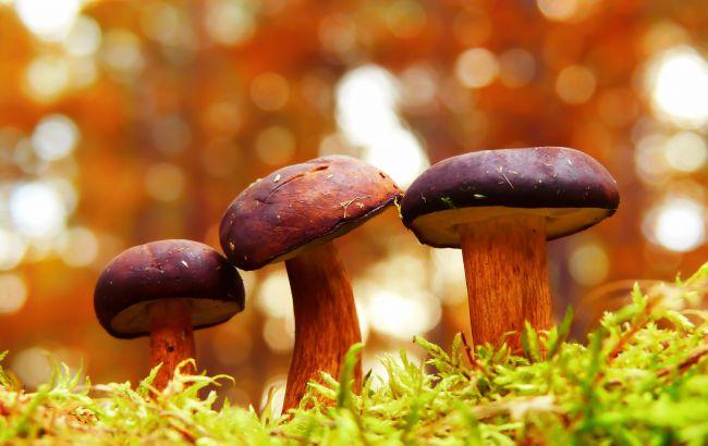 """""""Фантастический урожай"""". Куда поехать собирать грибы этой осенью: лучшие локации"""