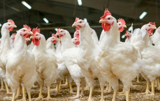 Украина возобновила экспорт курятины в EC