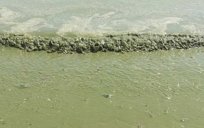 """Черное море """"позеленело"""": экологи бьют тревогу"""
