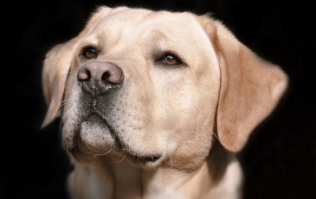 В Краматорске собака нашла пропавшего 12-летнего мальчика (фото)