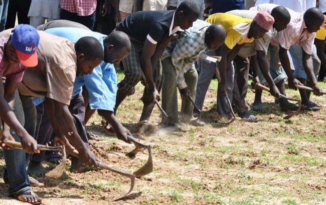 Фото: фермеры в Нигерии