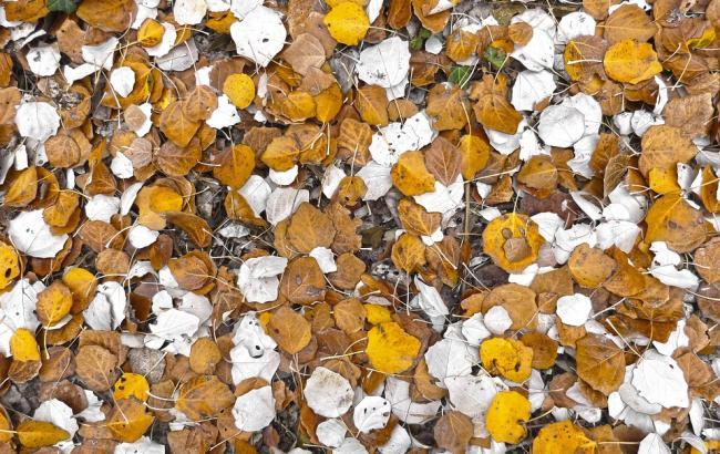 Фото: Осень (pixabay.com)