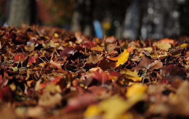 Стало известно о дополнительных выходных для украинцев в октябре