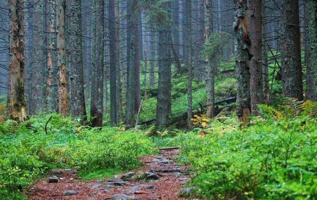 На Донбассе повреждено 30% природно-заповедного фонда, - Минэкологии