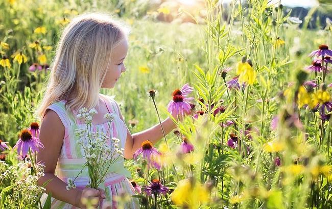 Фото: На Троицу собирают букеты полевых цветов (pixabay.com/jill111)