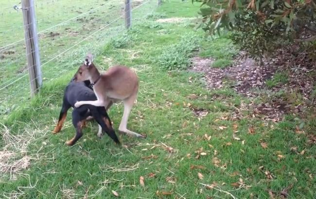 Фото: Собака и кенгуру (fishki.net)