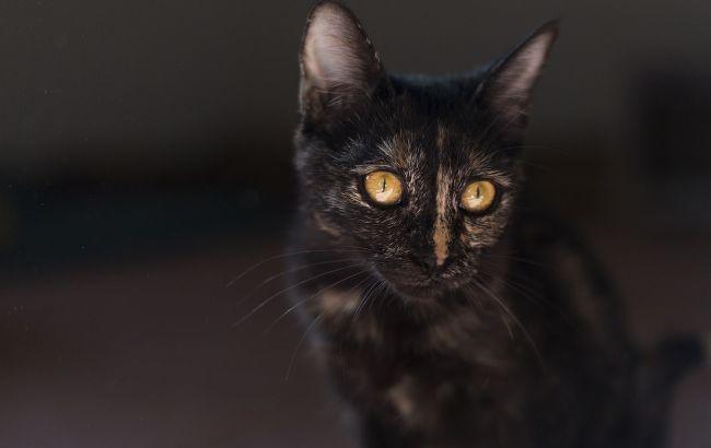 Под Львовом парень запихнул котенка в банку: видео сильно разгневало сеть