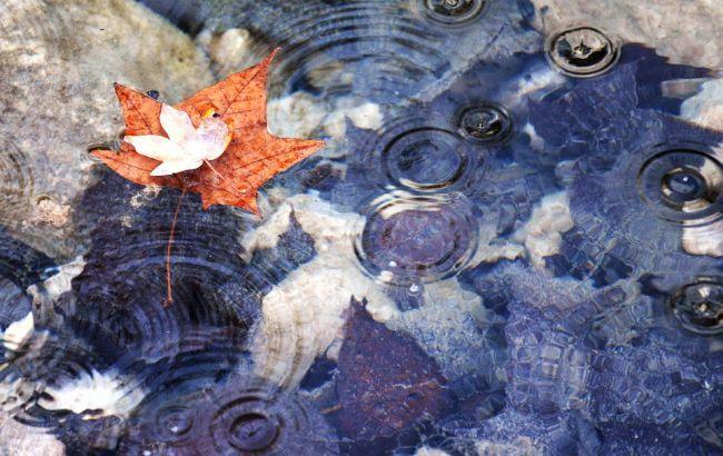 Фото: дождь (pixabay.com)
