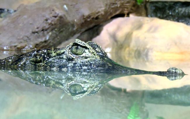 Фото: Крокодил (unsplash.com/Marcos Silveira)