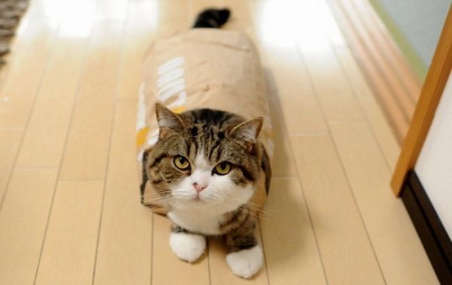 У Книзі рекордів Гіннесса вибрали найпопулярнішого в світі кота (1.02 13) 2649101d2bf6e