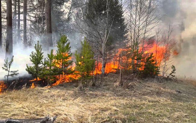 Фото: в Украине сохраняется чрезвычайный уровень пожарной опасности