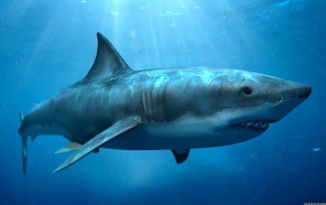 Фото: Акула (EdaPlus.Info)