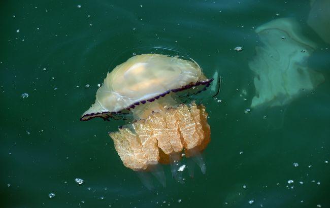 Море в Одессе оккупировали медузы, которые мешают отдыхающим (видео)