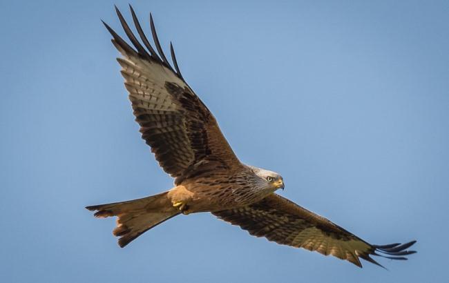 С высоты птичьего полета: выбраны лучшие фото, сделанные с дронов