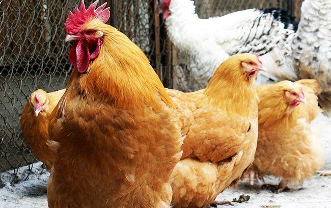 Ирак снял запрет наэкспорт украинской птицы