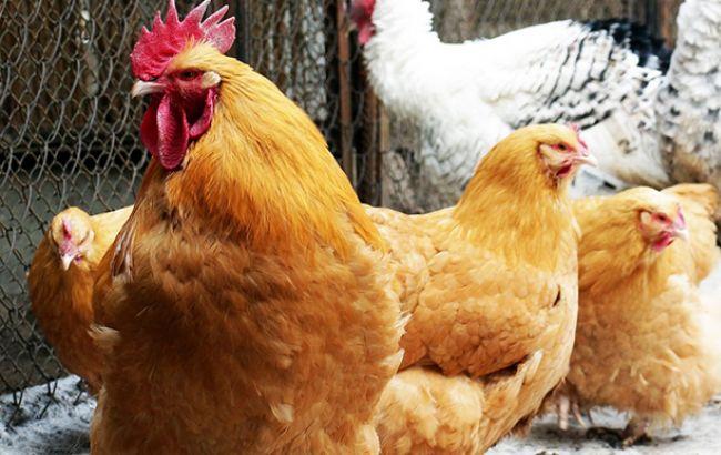 Фото: птицеводство (minagro.gov.ua)
