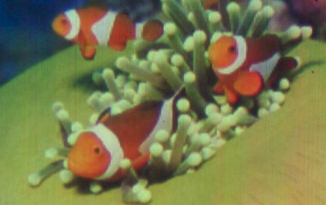 Фото: нанознімок надрукувано у Швейцарському федеральному технологічному інституті (Radio24.ua)