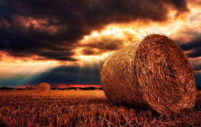 Посухи і суховії: метеоролог розповіла, як погода вплине на врожай в Україні