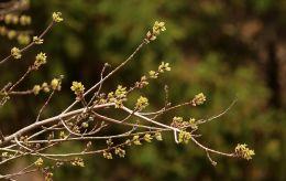 Синоптики рассказали, когда в Украину придет теплая весна