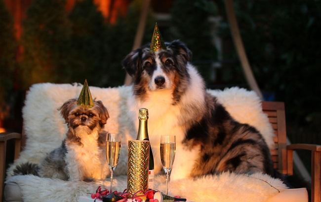2018 - год Собаки (фото: pixabay.com)
