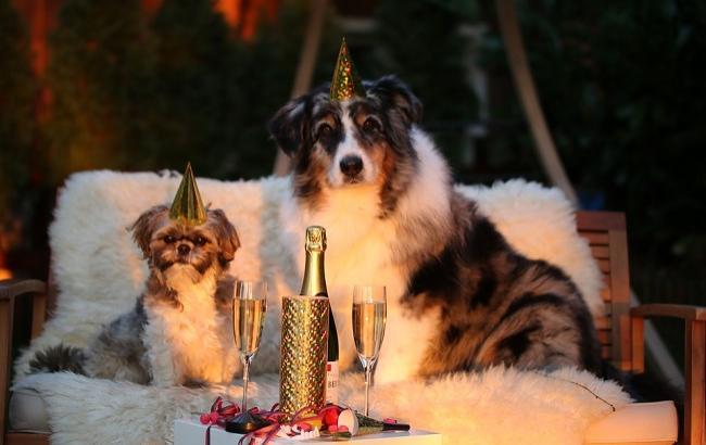 Фото: 2018 год собаки (pixabay.com/markito)