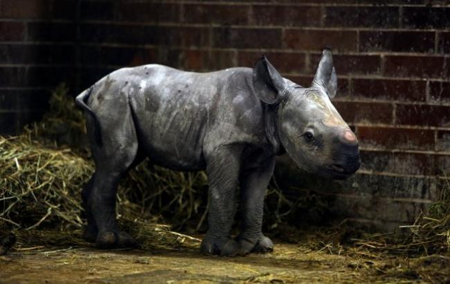 Фото: Черный носорог (Radio Prague)
