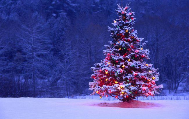 Фото: на дерева будуть клеїти етикетки з кодом