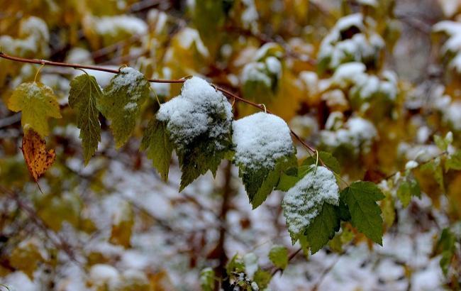 Фото: Перший сніг в Україні (strana.ua)