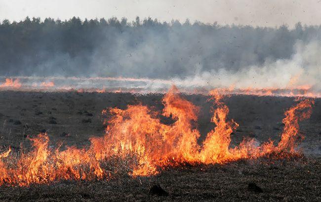У Київській області через підпал сухостою згоріли дачні будинки