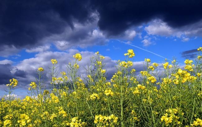 Фото: Погода (pixabay.com/ulleo)