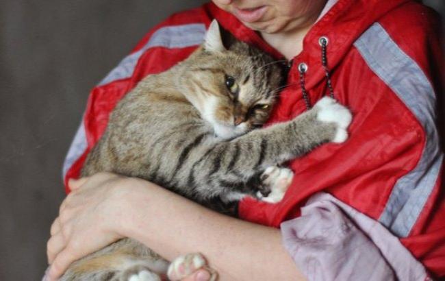 В Киеве бесплатно раздадут котят в хорошие руки
