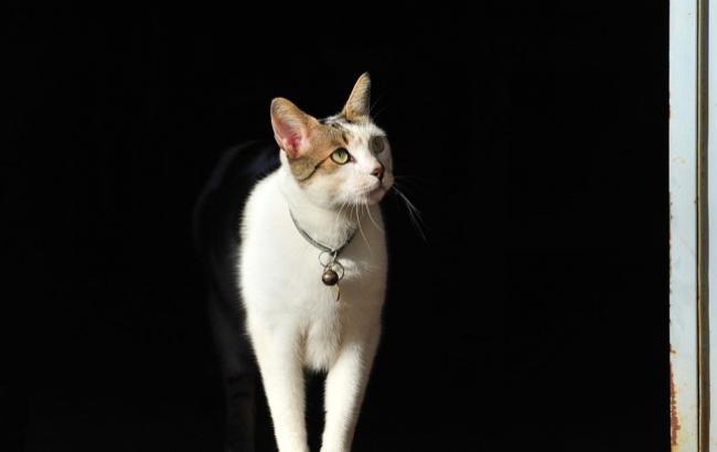 В мережі опублікували веселе відео з полохливим котом