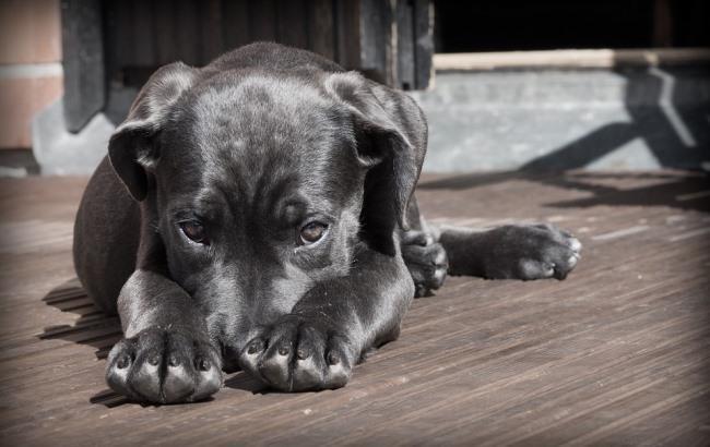 У Житомирі водій іномарки жорстоко вбив собаку (відео 18+)