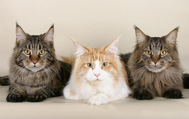 Фото: Коты (pixabay.com/skeeze)