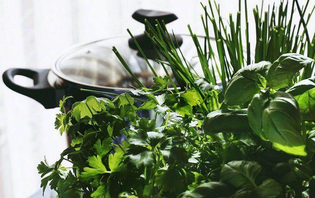 Сезон зелени открыт: как ее выбирать и как хранить для максимальной пользы
