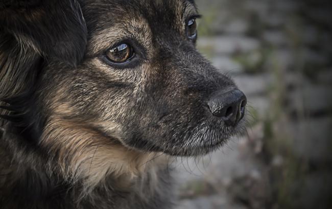 Фото: Собака (unsplash.comMarek Prygiel)