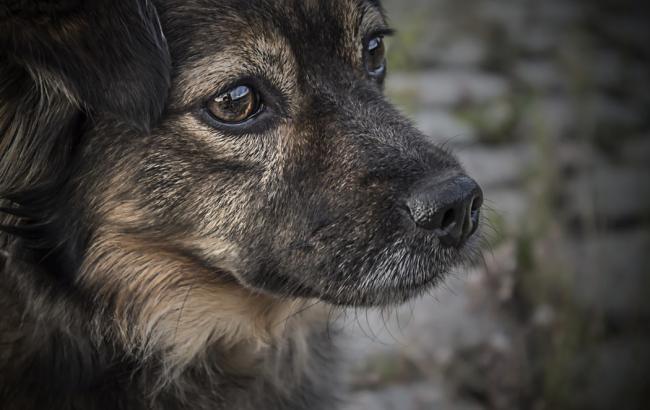 В Киеве пенсионер отстреливает котов и собак