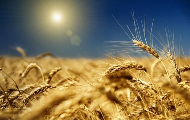 Αποτέλεσμα εικόνας για зерно