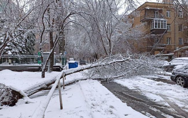 Десятки травмированных, ДТП и деревопад: последствия непогоды в Украине