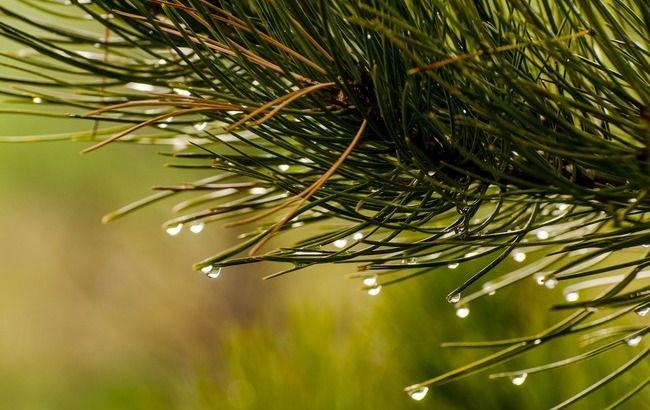 Ховаємо парасольки: синоптики розповіли, де буде найхолодніше