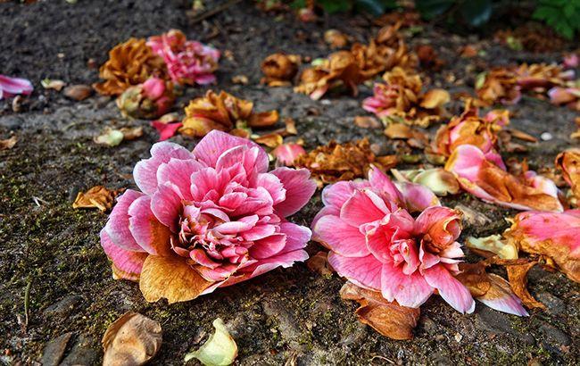 У Києві утворилося величезне звалище квітів після 8 березня (фото)
