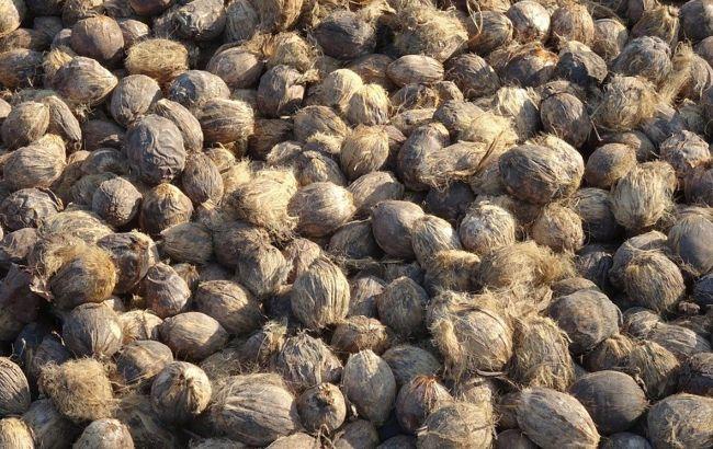 В Україну завезли небезпечні горіхи, що викликають рак: як вони виглядають