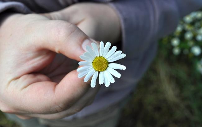 Ілюстративне фото (pixabay.com)