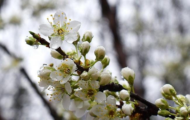 Погода на 23 травня: в Україні місцями дощі, температура до +28