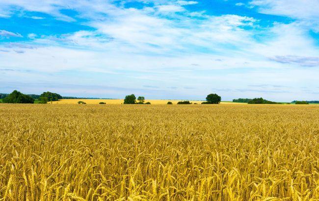 Названа расчетная стоимость гектара земли в Украине