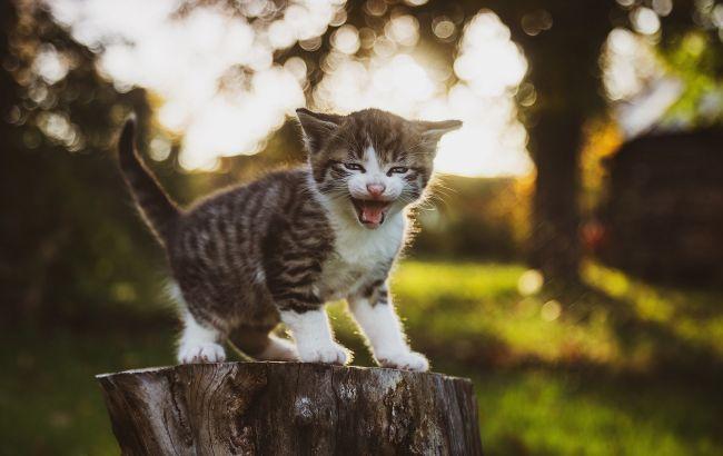 Вирішили погодувати: в Одесі кошеня зі сказом напало на блогерів
